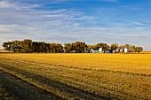 Kanada, Saskatchewan, am Highway 6 South, Farm, herbstlich