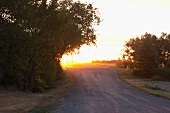 View of road and trees in Moose Jaw at morning light, Saskatchewan, Canada