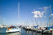 Sail boats standing in row, Gromitz harbour, Schleswig Holstein, Germany