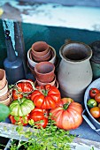 An arrangement of fresh tomatoes and terracotta pots