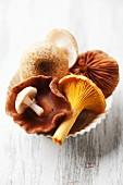 A bowl of fresh mushrooms