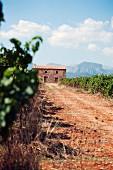 The Binigrau wine estate on Majorca, Balearic Islands