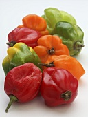 Colourful Scotch Bonnet chilli peppers