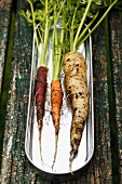 Three different carrots on a metal dish