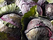 Many Whole Red Cabbage