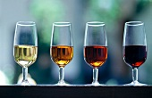Various types of sherry sherry glasses: Fino, Oloroso, Amontillado, Pedro Ximenez (Andalusia, Spanien)