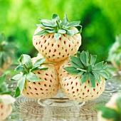 White strawberries (pineapple strawberries)