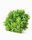A curly endive lettuce (Cichorium Endivia var. Crispum)