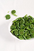 Maine Fiddleheads