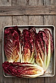 Treviso Radicchio from a Maine Farm; Drizzled with Olive Oil, Salt and Pepper in Preparation for Grilling.