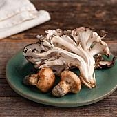 Wild Matsutake and Maitake Mushrooms Harvested in Maine