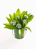 A bunch of ramsons in a bucket