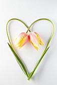 Zwei Tulpen mit Stängel in Herzform gelegt