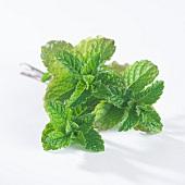 Green mint (mentha spicata)