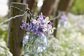 Spanish bluebells (hyacinthoides hispanica) in a glass vase by a fence