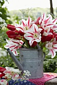 A bunch of tulips in zinc watering can in a garden