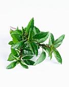 Mint (mentha X piperita var. citrata)