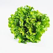 Lettuce (lactuca sativa var. capitata)