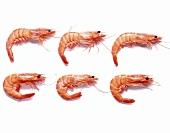 Six prawns on a white surface