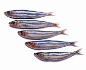 Five sardines on a white surface