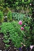 Vegetable bed in garden