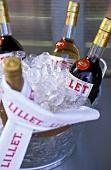 Various wine bottles in an ice bucket