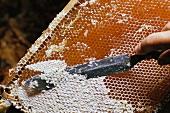 Imker bei der Honiggewinnung