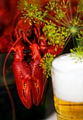 Cooked crayfish, beer and dill