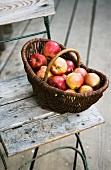 A basket of fresh apples on a garden chair
