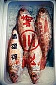 Fische von einem Markt in Japan