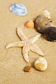 Sandy beach with starfish, seashells and stones