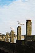 Seaside with gulls on wooden posts