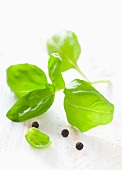 Fresh basil leaves and black peppercorns