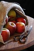Fresh apples in jute bag