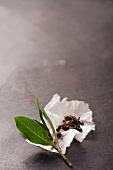 Lorbeerblätter mit Gewürzen auf Küchenpapier