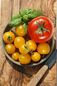 Red and yellow tomatoes with basil