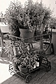 Wheeled etagere with green plants on terrace