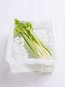 Celery being quenched in ice cold water