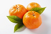 Three mandarin oranges with leaves