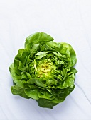 A lettuce seen from above