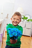 Boy holding posy of blue-dyed flowers in both hands