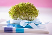 Fresh cress with a spotted bow