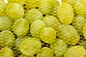 Green grapes in a net