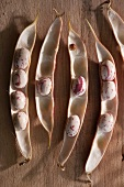 Fresh borlotti beans in pods