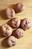 Waycha - alte Kartoffelsorte aus den Anden