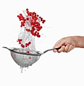 Redcurrants being washed in a sieve