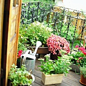 Various plants in pots on a balcony