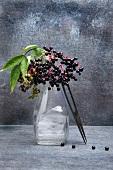 Sprigs of elderberries in a glass vase