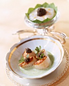 Scallops in herb sauce