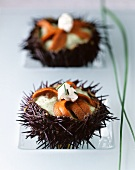 Sea urchins with herb mousse